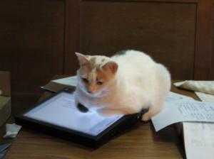 Photon the Cat